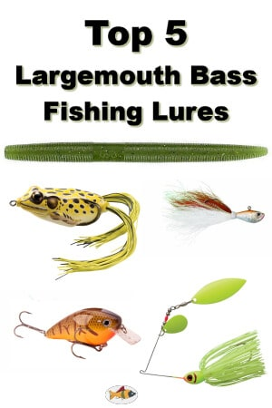 Top 5 largemouth bass fishing lures fins catcher for Largemouth bass fishing lures
